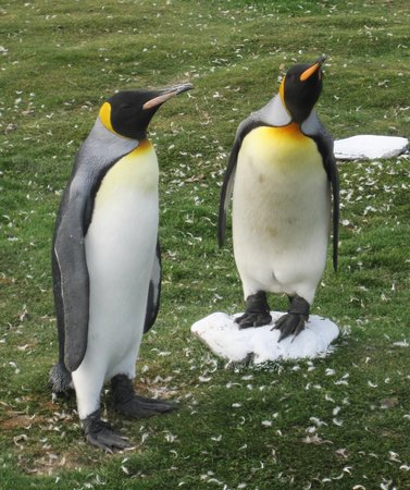 East Falkland, Falkland Islands: up close and personal!