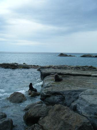 Otahuna Country House: Seals at Cape Palliser