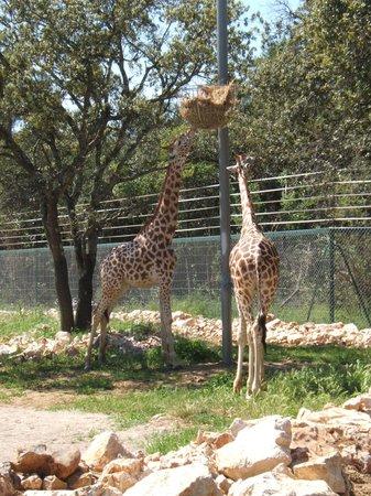Parc Zoologique Henri de Lunaret