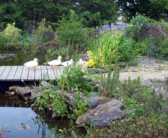 Blaenfforest Cottage Holidays : garden friends at Blaefforest cottage