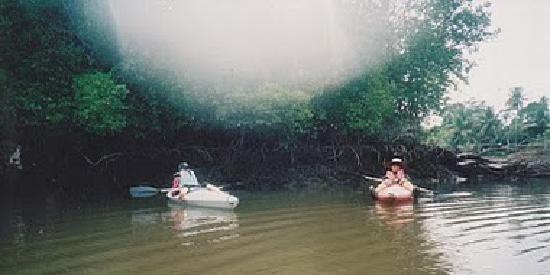 Sabah, Malaisie : Kayaking in the Mangrove