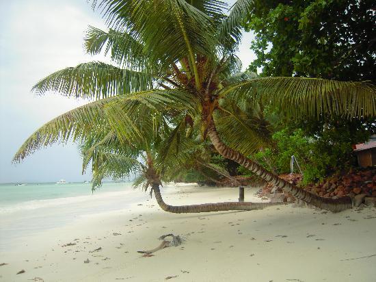 plage paradisiaque avec son sable blanc