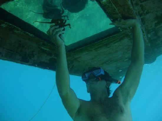 """Captain Nick's Glass Bottom Boat Aphrodite : Captain Nick with"""" friend"""" under the boat"""