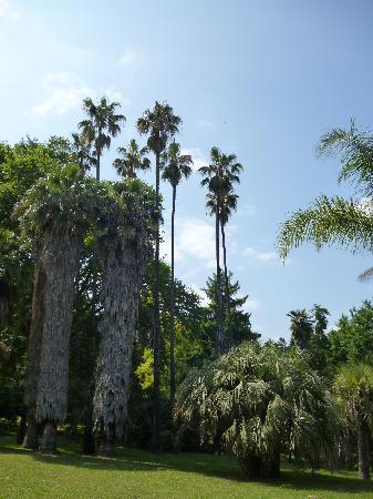 Orto Botanico di Roma: A view from the garden