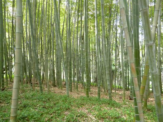 Orto Botanico di Roma: Small bamboo wood