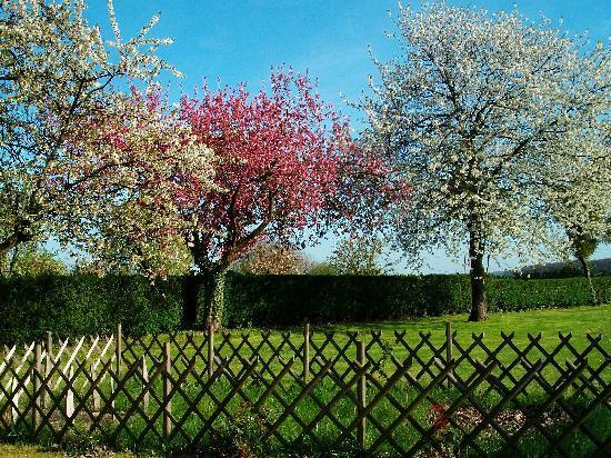 MANOIR LES PERDRIX : Le Printemps en Normandie