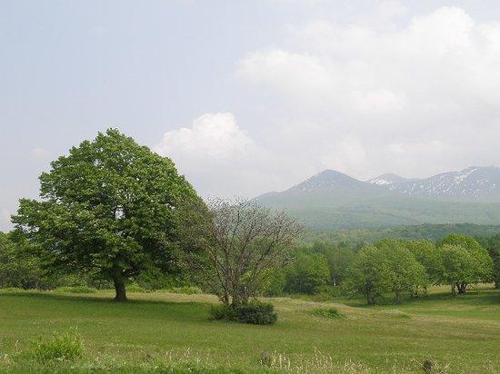 Kayano Heights: 芝生の向こうの八甲田山