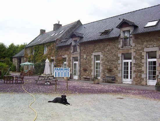 Hotel La Quebecoise Le Bas Frene : The dog is the friendliest thing at the hotel
