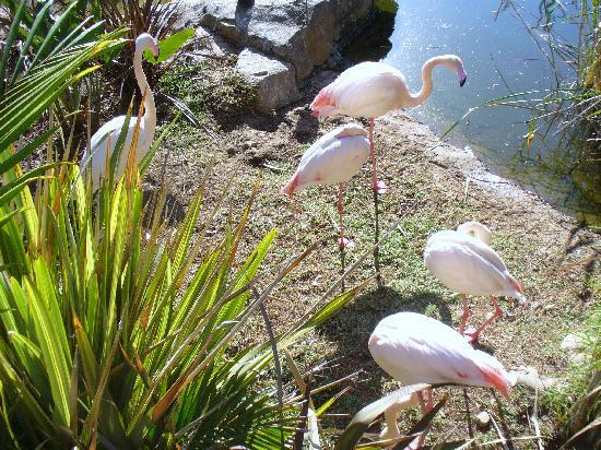 Cango Wildlife Ranch: fenicotteri rosa
