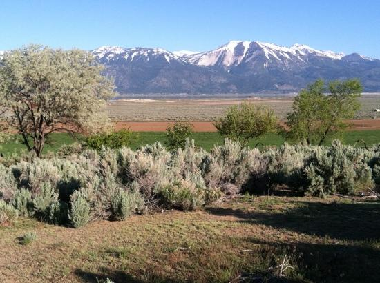 Deer Run Ranch Bed and Breakfast: sagebrush and mountains