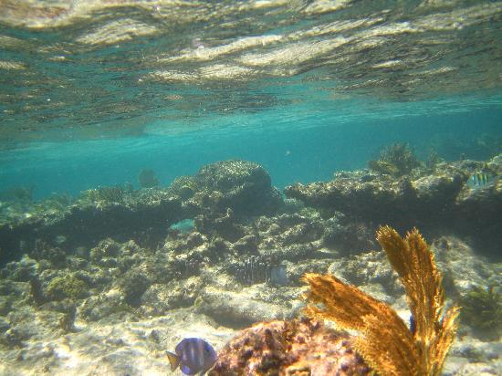 Bodden Town, Grand Cayman: Gorgeous reef just off shore