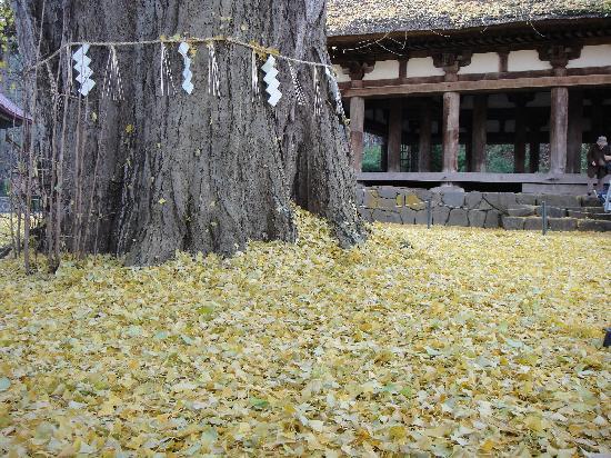 Shingu Kumano Shrine Nagatoko: イチョウの絨毯