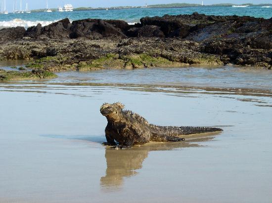 Rubina Island Red Sand Beach Picture Of Galapagos