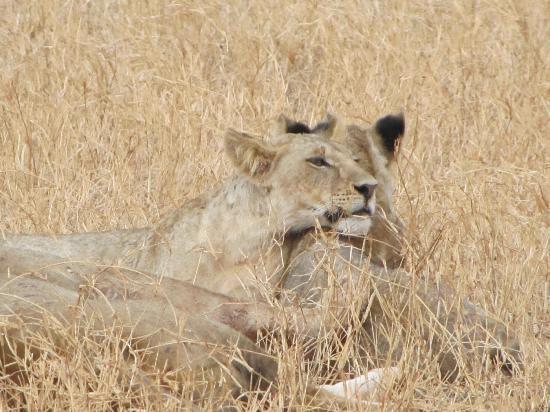 Mambrui, Kenya: Il Safari