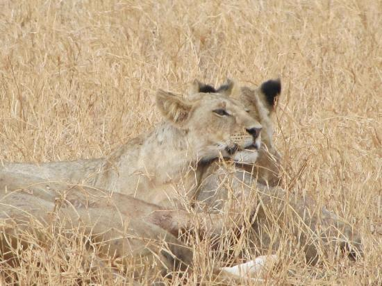 Mambrui, Кения: Il Safari