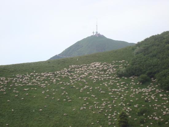 Saint-Genes-Champanelle, France: Les puys; pâturages des moutons !