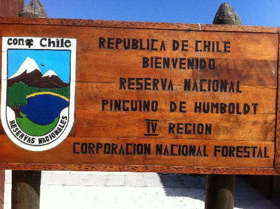 La Serena, Chile: national reserve- humbolt penguin
