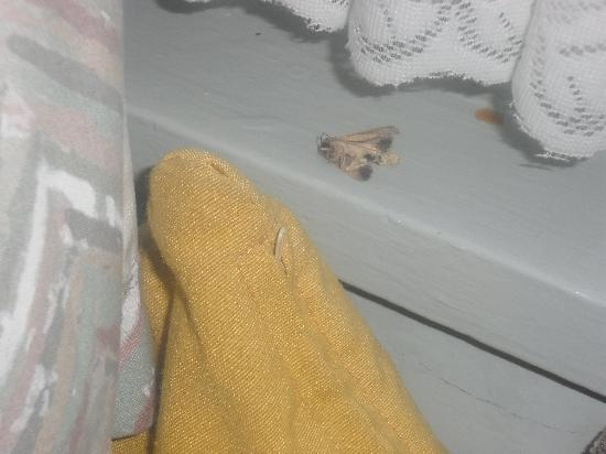 Katoomba Mountain Lodge: Dead moth :-(