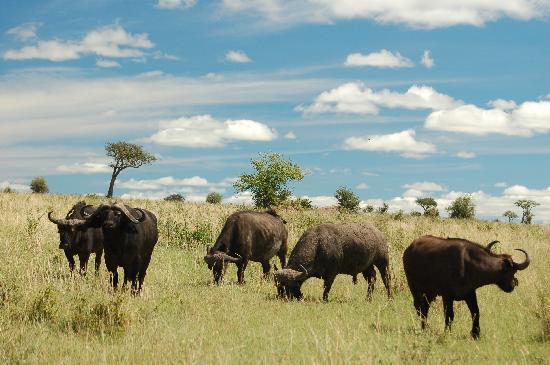 Leleshwa Camp: Wildlife
