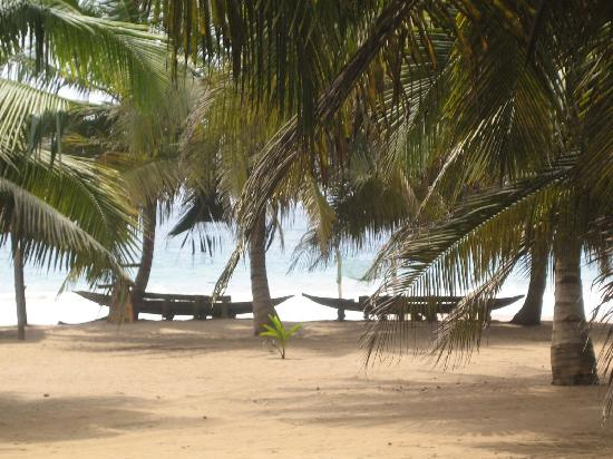 Green Turtle Lodge : Tables on the beach