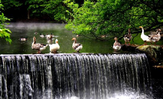 1761 Old Mill Restaurant: Old Mill Duck Pond