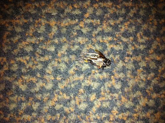 Econo Lodge : Bugs on floor