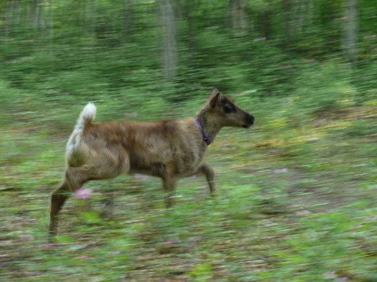 Running Reindeer Ranch : Running Reindeer Baby
