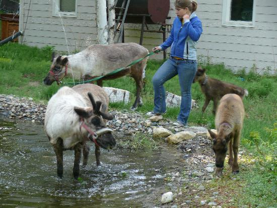 Running Reindeer Ranch : Chaos at the Pond