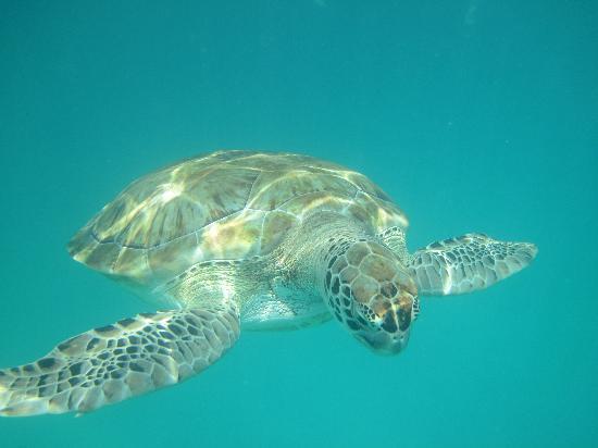 The Crane Resort: take your underwater camera!!!