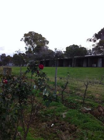 Hunter Valley Resort: back of vineyard block