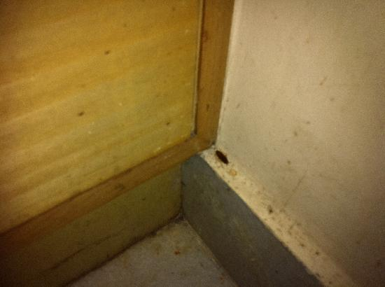UG Deluxe Lodge: Cockroach that wasn't hiding too well