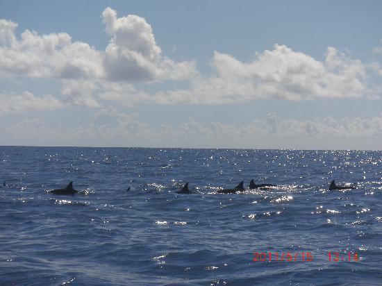 Sands Suites Resort & Spa: delfine