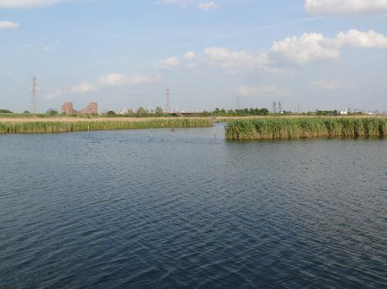 Meadowlands Conservation Trust: View of the Meadowlands