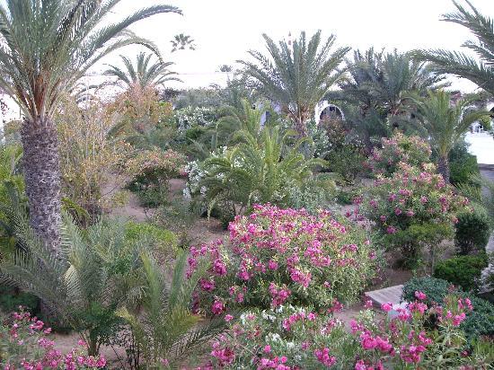 Seabel Rym Beach: jardin