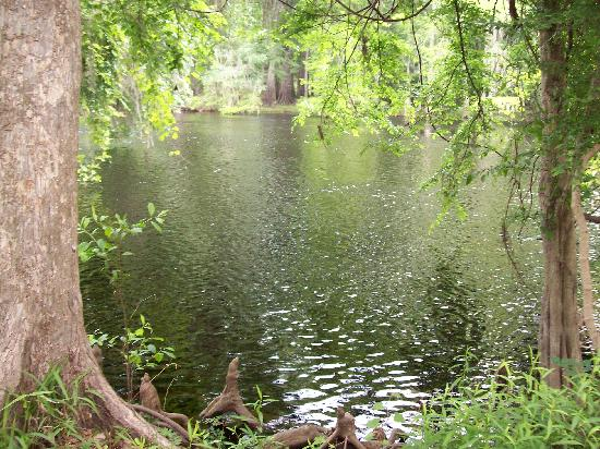 Ginnie Springs: View from our campsite