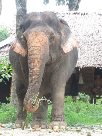Nosey Parker's Elephant Camp - Private Day Tours : our ellie having lunch