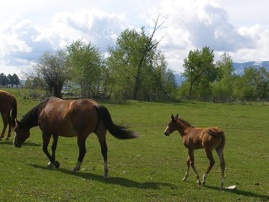 Creekside Country Haven: moma & foal