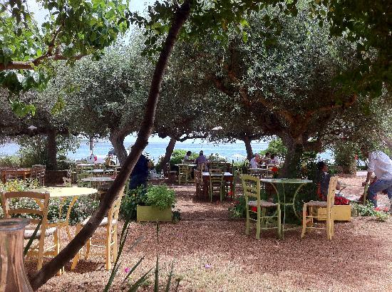 Elies Hotel: The taverna in the olive grove