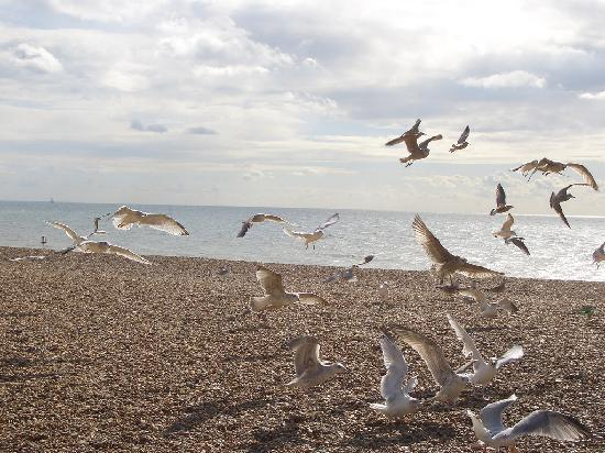 Брайтон, UK: Seagulls in Brighton UK