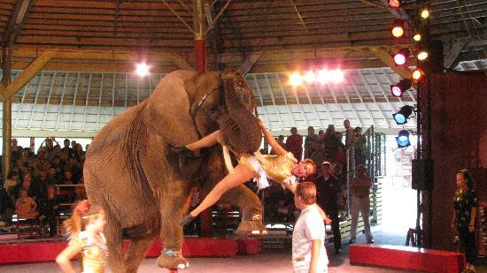 Circus World: circus show