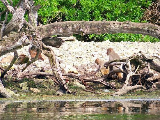 Barefoot Travelers Rooms: Monkeying around Monkey Island