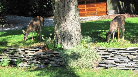 Tranquil Thyme Bed and Breakfast: Double Vision - Deer in Front Yard