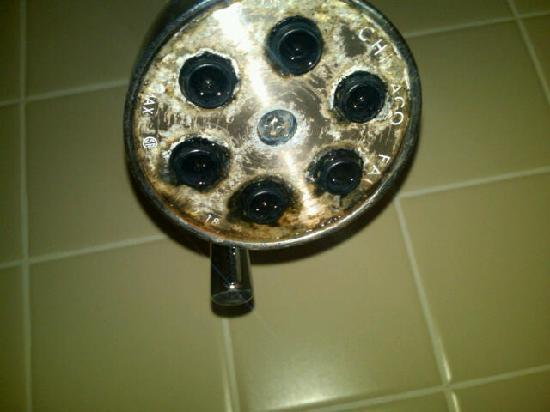 The Time New York : Shower head mold