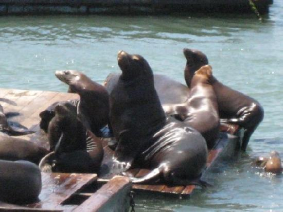 San Francisco, CA: Silly Seals