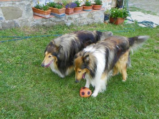 Il Poggiolo Bed & Breakfast : dogs2