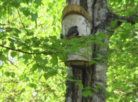 A B&B on C: Bird House outside B&B room