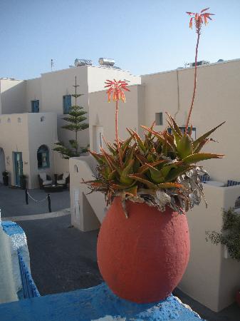 Alizea Villas & Suites: Alizea hotel - back