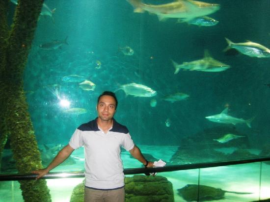 Rainforest Exhibit Picture Of Audubon Aquarium Of The