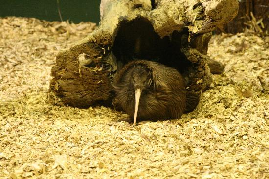 Toru - Day Tours: Cutest kiwi EVER!