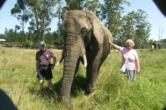 Knysna Elephant Park: Making friends
